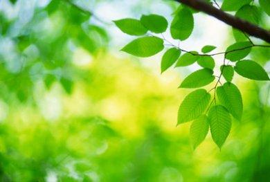 foglie