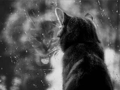 Rainy_Morning_Wallpapers_2-8114