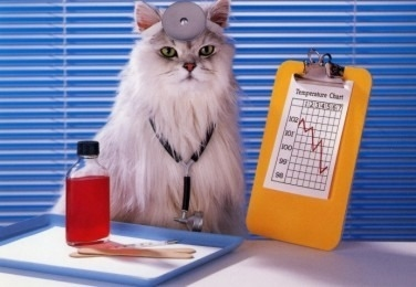 dottor-gatto