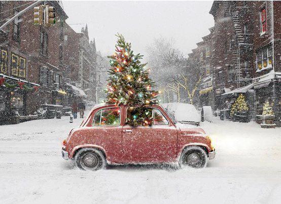 Frasi Di Natale A Forma Di Albero.Frasi Sull Albero Di Natale Immagini Aforismi Citazioni Albero Di Natale