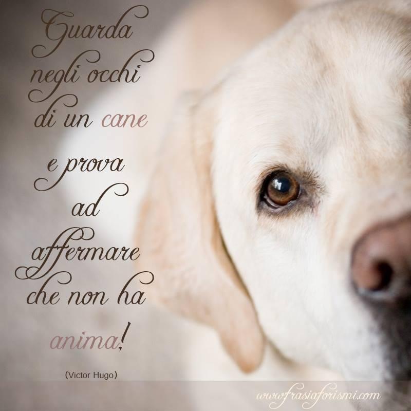Frasi Sui Cani Frasi Famose Sui Cani Aforismi Citazioni Sui Cani