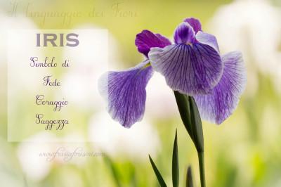 il linguaggio dei fiori, IRIS