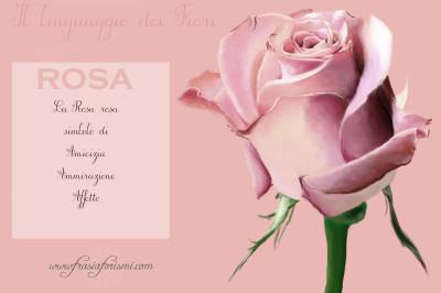 il linguaggio dei fiori : LA ROSA