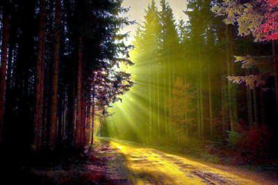 sentiero-di-luce-603-liv-col-184433_192704887551094_777956337_n