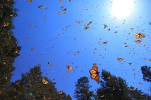 Butterfly 3D-700