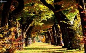 allee des arbres, feuilles colorees, automne 161748