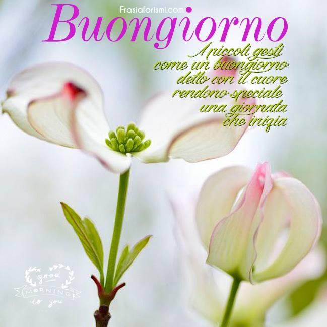 Frase di buongiorno con immagine per facebook for Foto belle di buongiorno