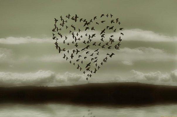 http://www.frasiaforismi.com/wp-content/uploads/2011/02/cuore-di-uccelli-in-volo.jpg